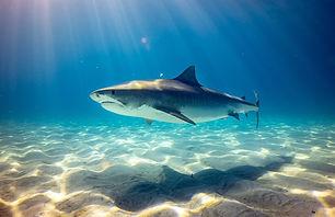 AWARE-SHARK-MIAMI.jpg