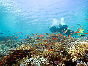 PADI-AWARE-Coral-Reef-Consercation-Cours