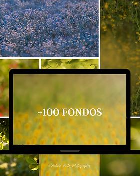 100fondos