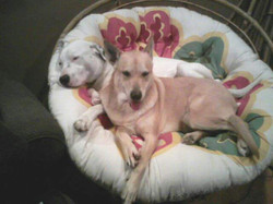 Lavish Pet Care