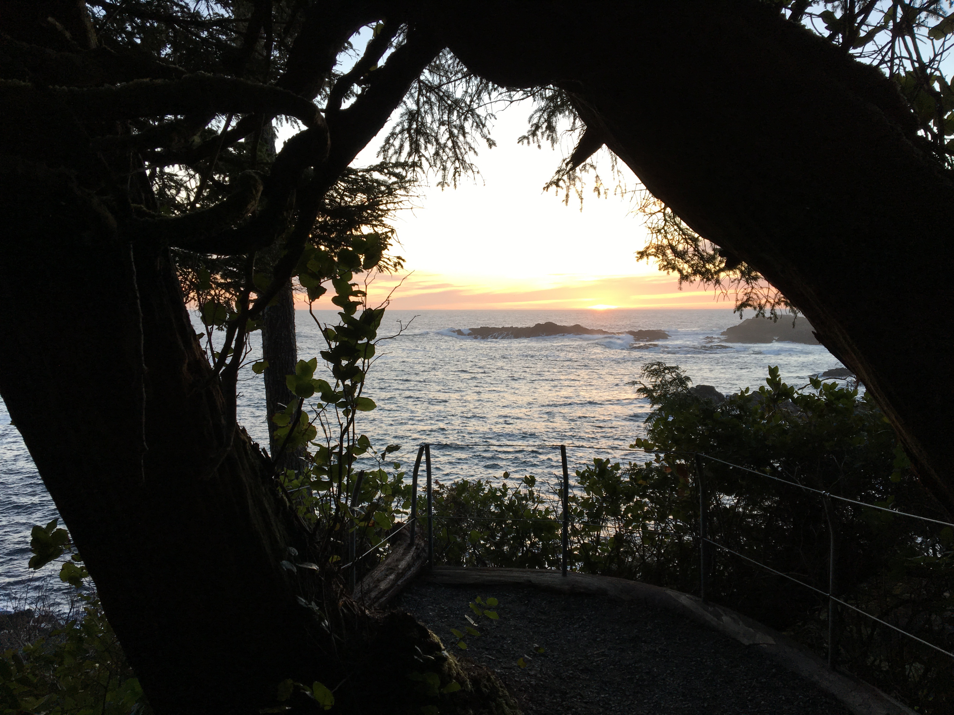 Wild Pacific Trail at sunset