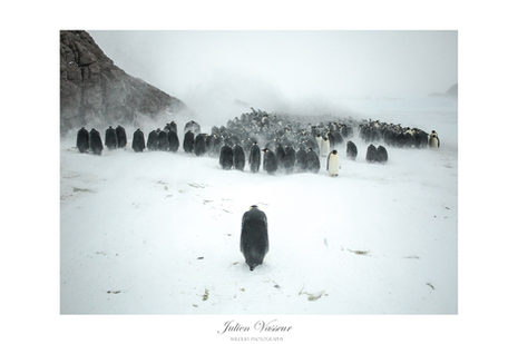 Horde Glaciale (Manchot Empereur)