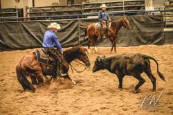 USCHA Cutting Horse