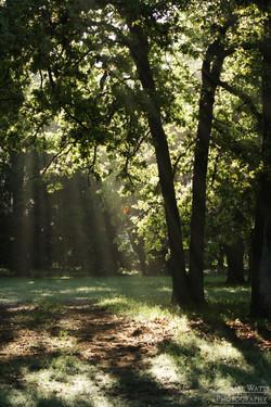 Early Morning Sun Rays