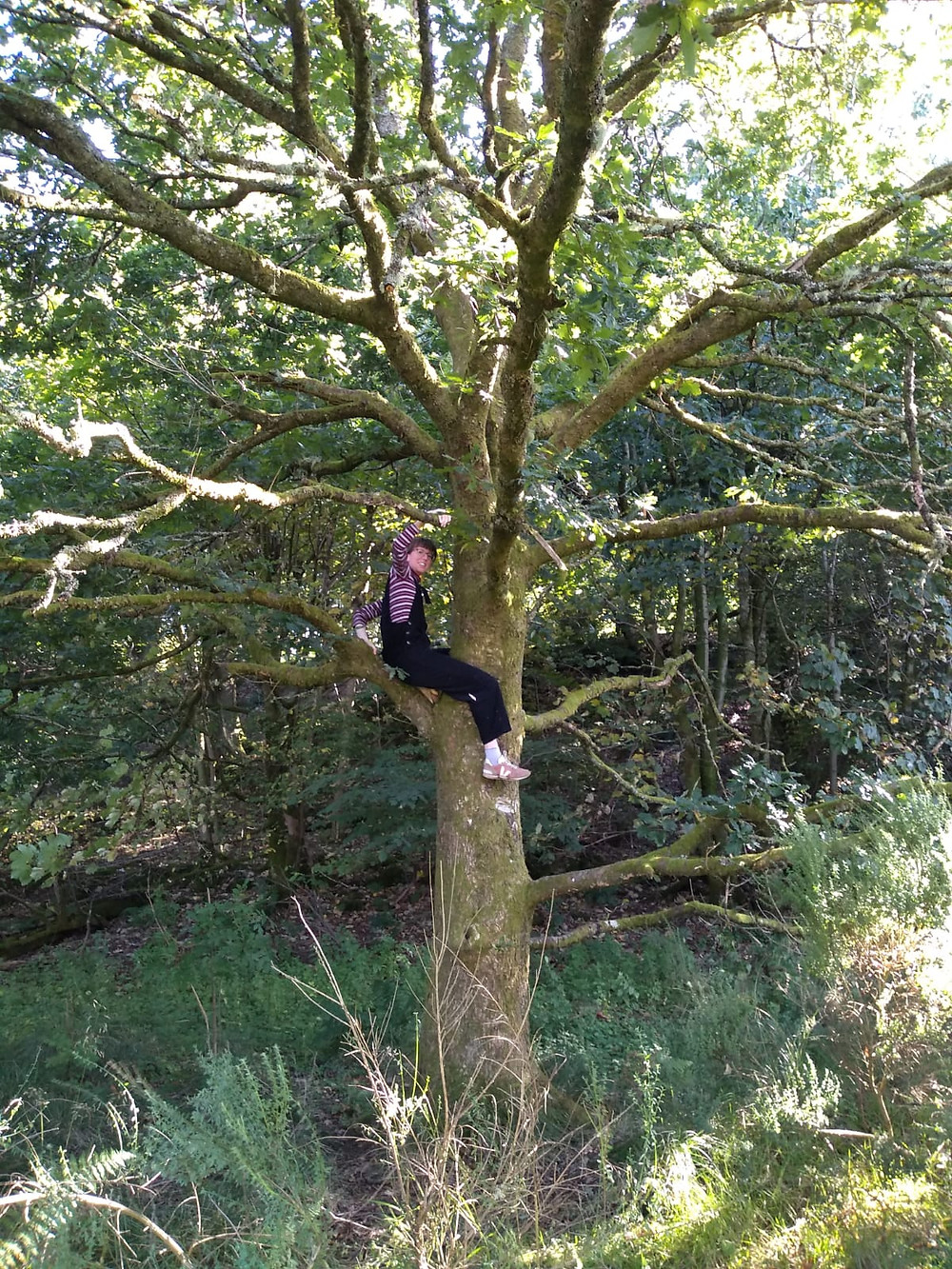 Emily is halfway up a tree, sitting on a branch and smiling at the camera.