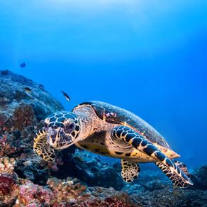 サンゴ礁に優しい日焼け止めディスペンサーがハワイ島のビーチに設置
