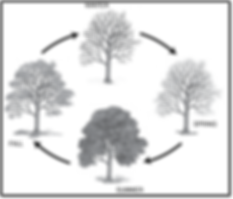 Seasons of fruit tree original- Taina Li