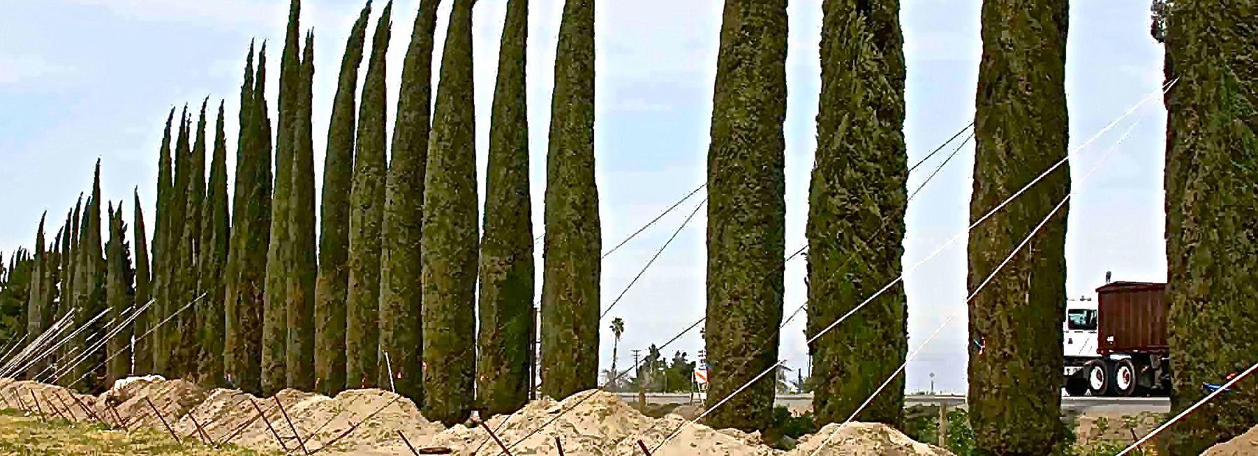 Cypress1-3
