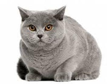 Il Gatto Ideale