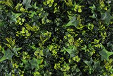 rainforest.jpg