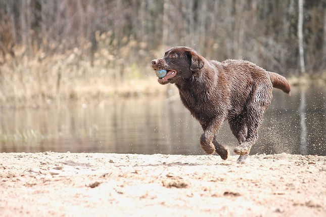 Welcome to Advanced K-Nine Training, providing elite training for you and your canine. We are your solution to bringing out the best in your dog and you!