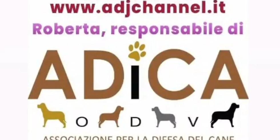 Adica su ADJ Channel