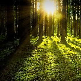 nature-1920x960 - Copie.jpg