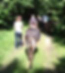 """groupe randonnée avec ânes bâtés ©""""Les Echappées Vertes"""""""