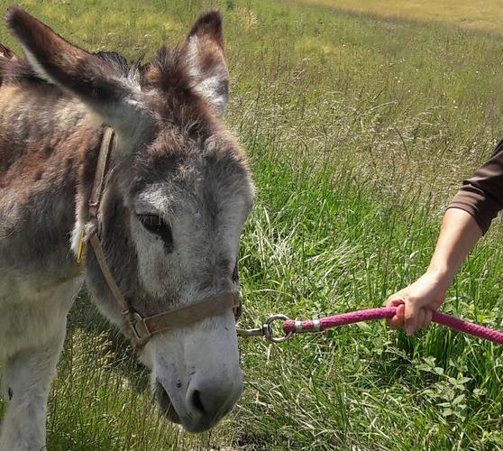 Balade guidée avec des ânes©Les Echappées Vertes