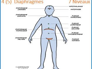 Les diaphragmes du corps humain