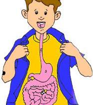La petite histoire de la digestion