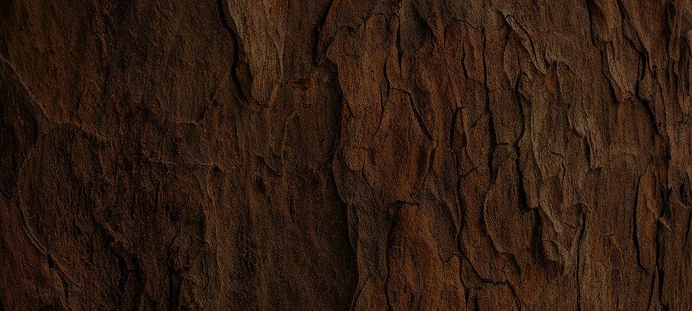 Bark-texture.jpg