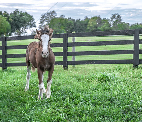 wildlife-photo-of-brown-and-white-horse-