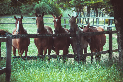 photo-of-a-group-of-horses-2123766.jpg