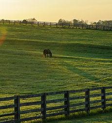 white-house-beside-grass-field-2042161_edited_edited.jpg