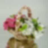 Plants-min.JPG
