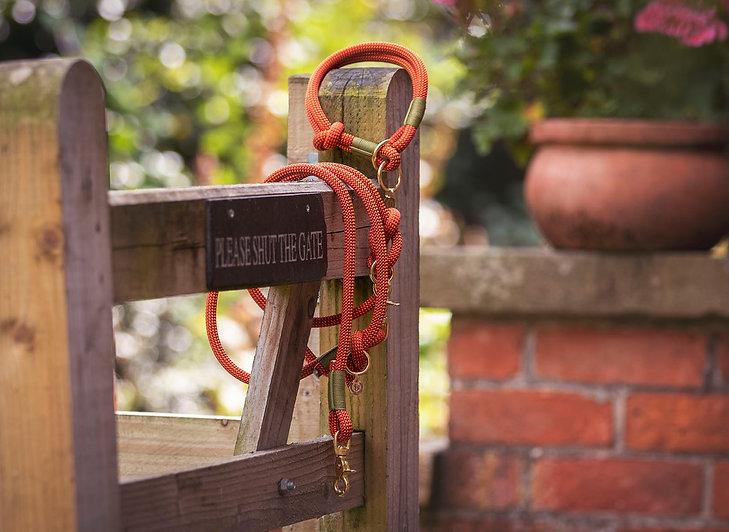 orange rope collar and lead on gte.jpg