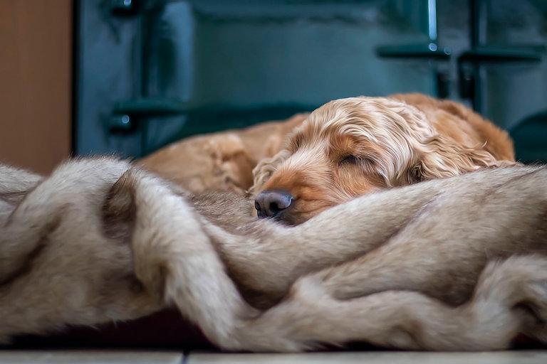 Harvey Faux Fur blanket.jpg