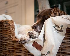 millie asleep duck blanket.jpg