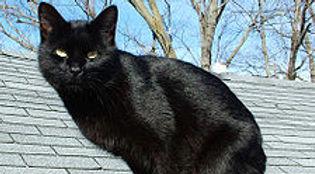 225px-Blackcat-Lilith.jpg