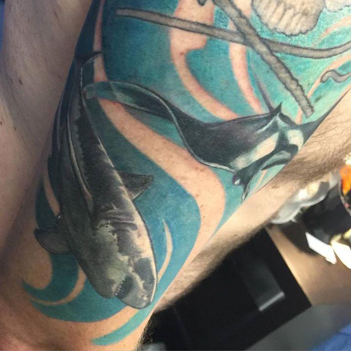 Healed shark fresh ray