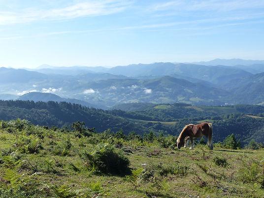 horse-2616117_1920.jpg