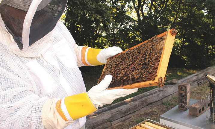 To the rescue of honeybees