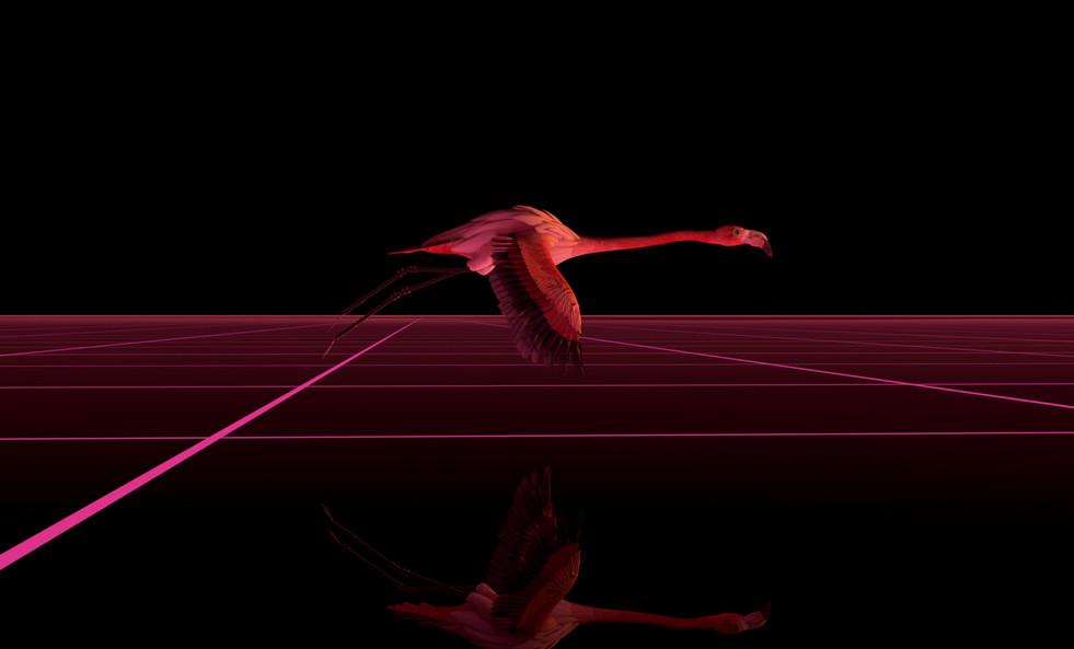 phoenix-10.jpg