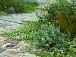 Old brick footpath in garden