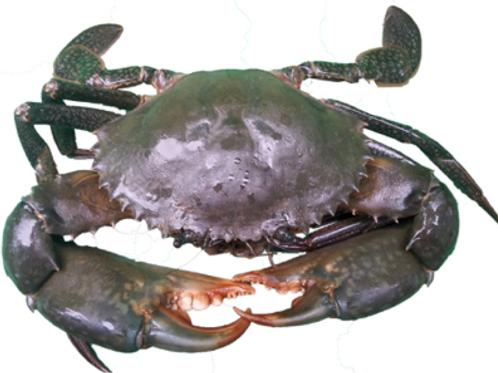 Frozen mud crab