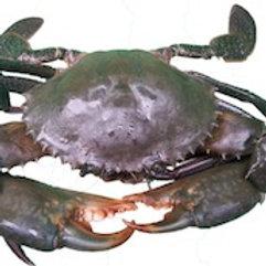 Live & Frozen Mud Crab (Scylla Serrata)