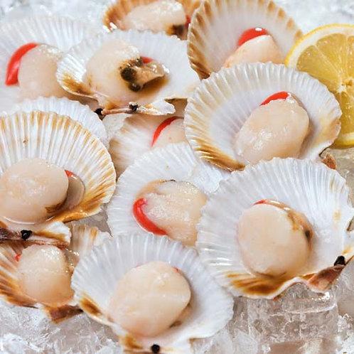 Queen Scallops - Half Shell