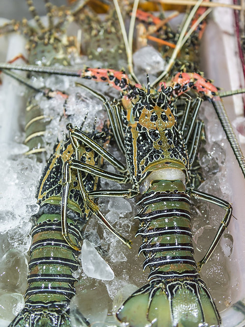 Frozen spiny lobster tail