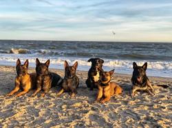 beachdogs2