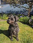 Little black dog.jpg