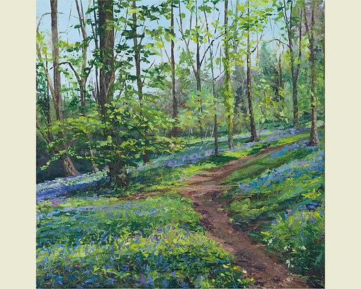 Bluebells, The Forgotten Garden, Lewtrenchard