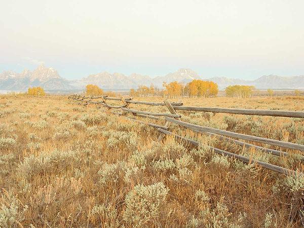 heyday-homestead.inspo.jpg