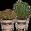 Thumbnail: Fűszernövények vegyesen (12 cm)