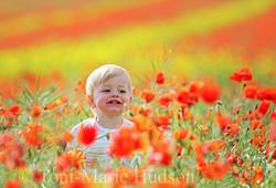 poppies9small.jpg
