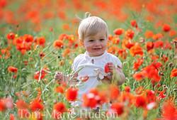 poppies18small.jpg