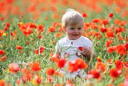 poppies20small.jpg