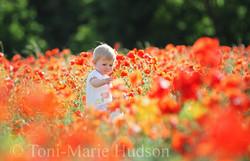 poppies86small.jpg