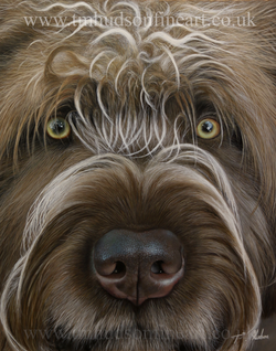 Copy of tmhudsonfineart-germanwirehaired