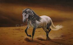 horse6.jpg